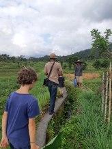 On marche dans les rizières