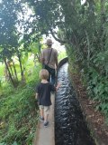 Le long des canaux d'irrigation