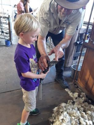 C'est la tondeuse pour tondre les moutons