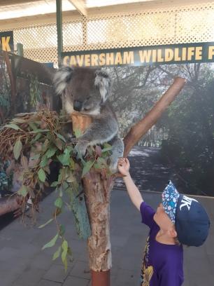 J'ai pu caresser un Koala